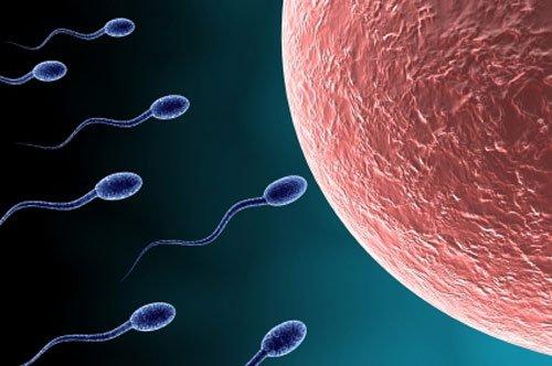 9 yếu tố ảnh hưởng đến tinh trùng